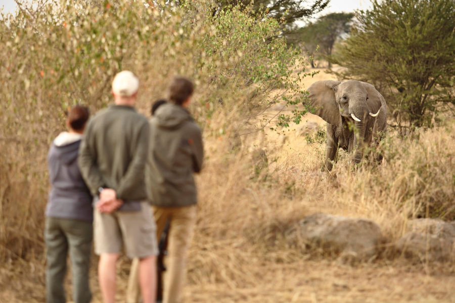 Tanzania: Wild Family Holiday