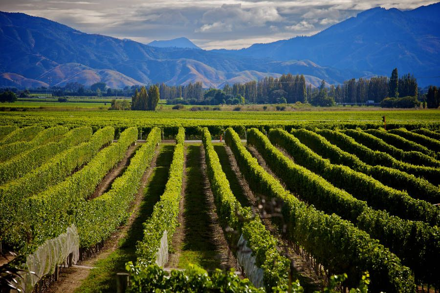 New Zealand's South Island Definitive Trip