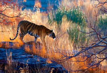 Deeper into India's Golden Triangle: Ranthambore