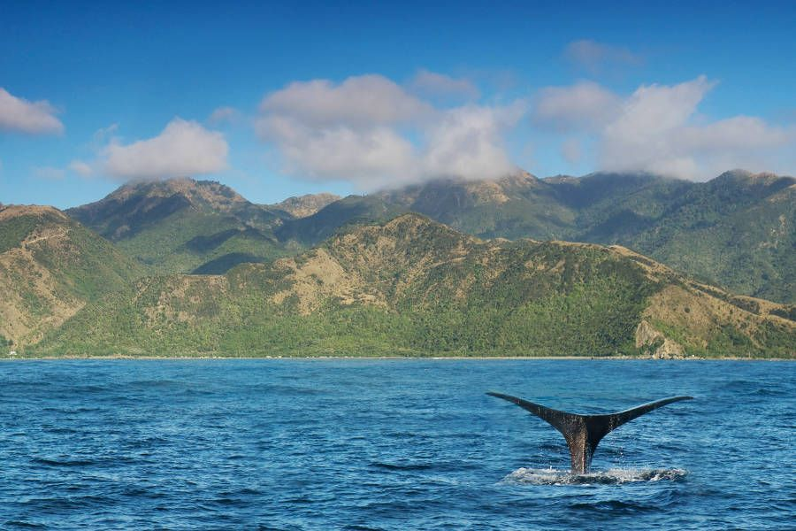 New Zealand: The Ultimate South Island Trip