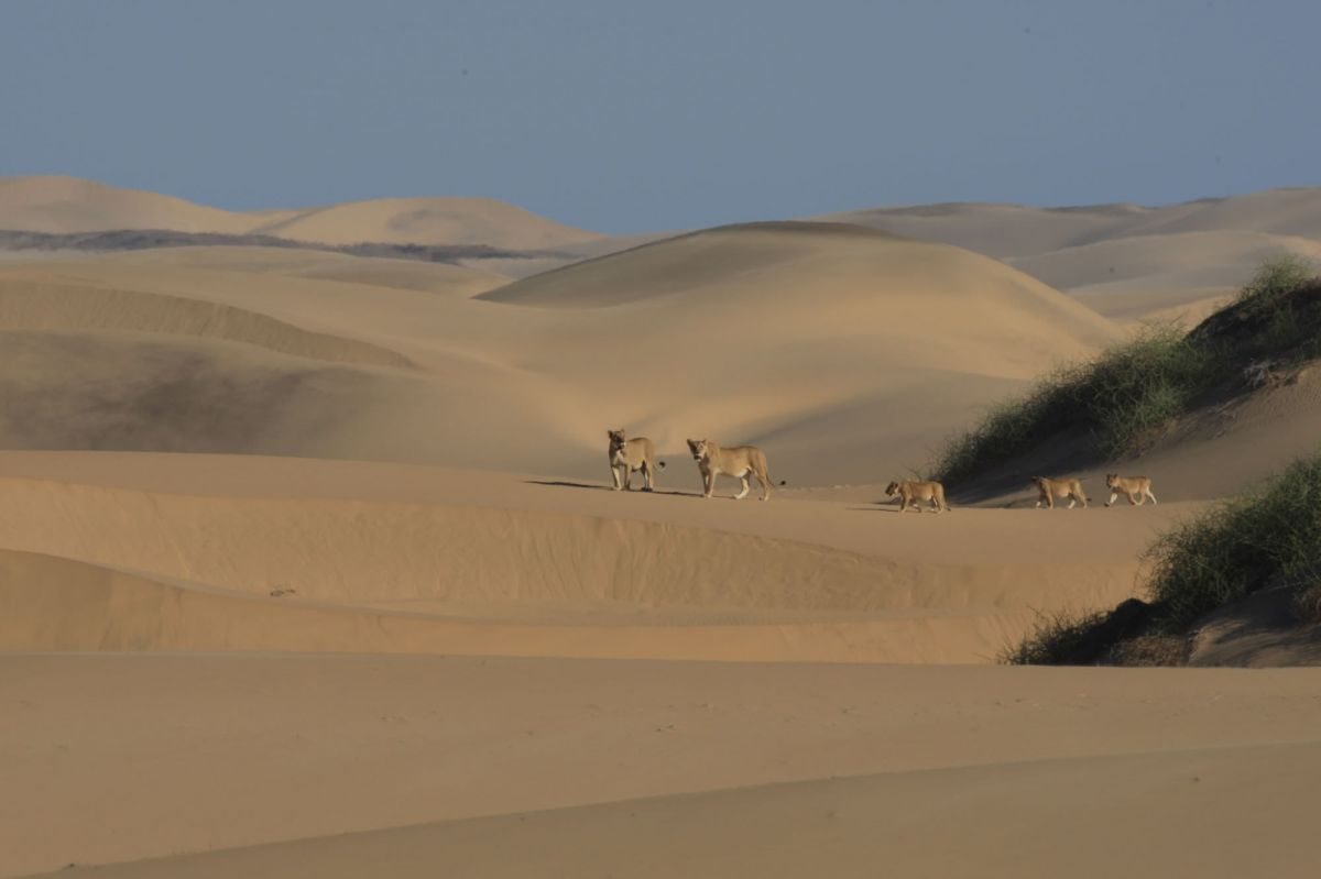 Boundless Namibia