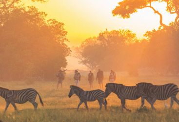 A walk on the Wild Side of Botswana