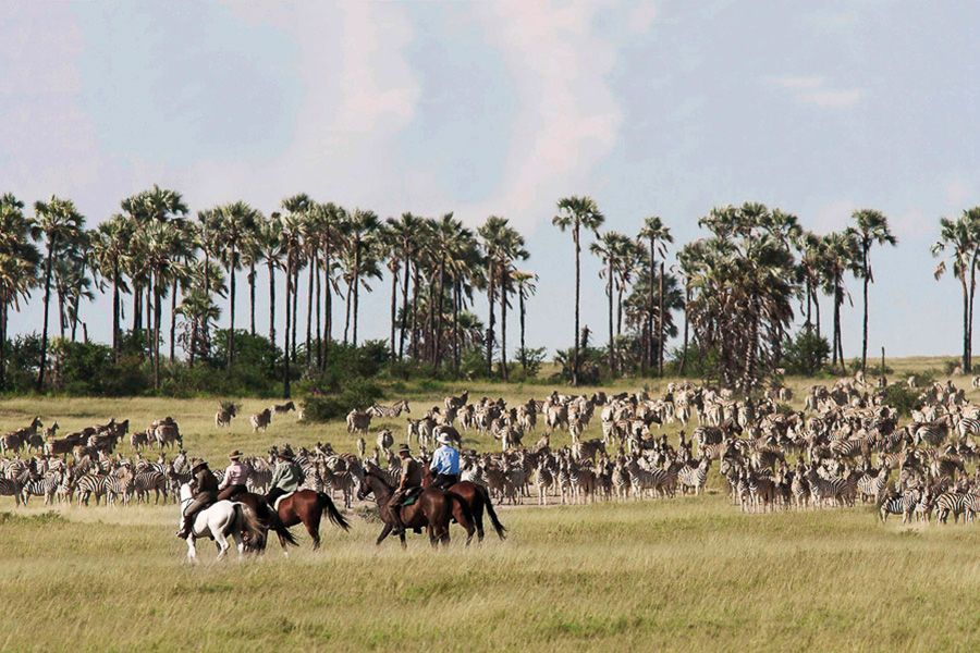 Botswana: Horizons of the Kalahari