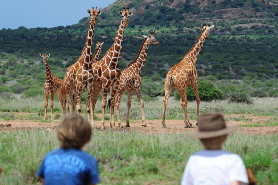 Camel Caravan in Wild Kenya