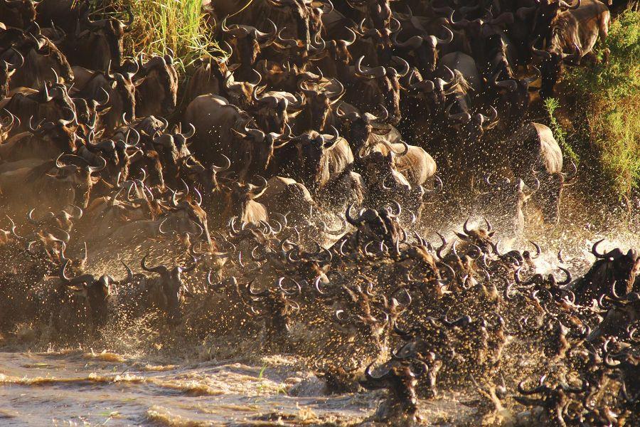 Tanzania: Serengeti Migrations