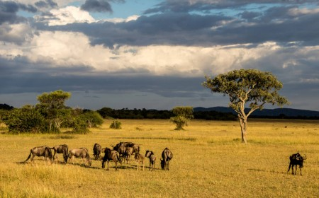 Wildebeest Herd in Serengeti