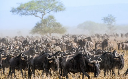 Kenya: Conservation in Action