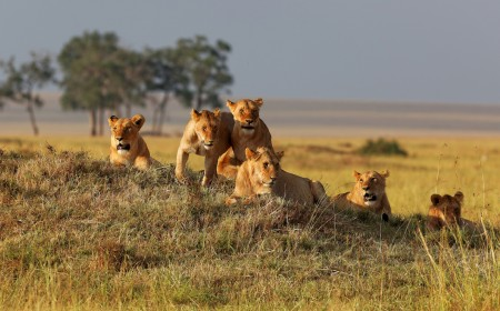 Think Big Cat, Big Five in Kenya