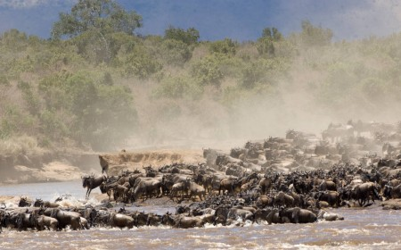 Kenya Tanzania Safari Travel Big Migration